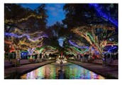 Houston Zoo Lights Educator Night