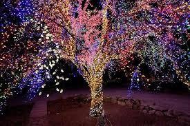 The Magic Tree