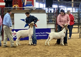LT FFA makes impressive showing, sale at 2020 Travis County Youth Show