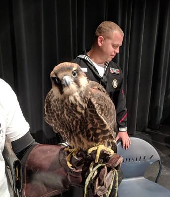 A Falcon visits the Falcons!
