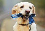 Weekly Dog Clinic