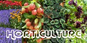 Online Horticulture Contest