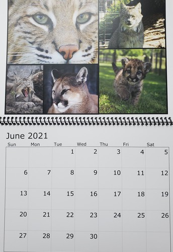 Get your Raffle Ticket and 2021 FOX Calendars!