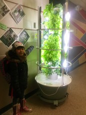 Plants... have you seen our Tower Gardens here at school yet?
