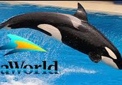 Why was Blackfish Created