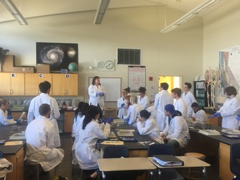 Ms. Yannes Describes the Lab - a cow eye ball dissection