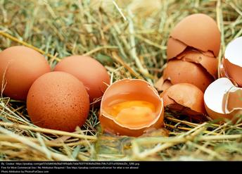 June 3rd - National Egg Day