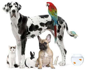 4-H Companion Animal Challenge