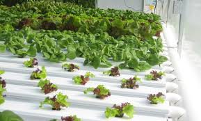 All You Need To Know About Hydroponic Drip System