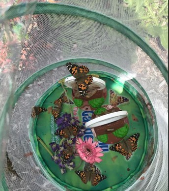 Butterfly Release in Ms. Brown's Grade 2 Class