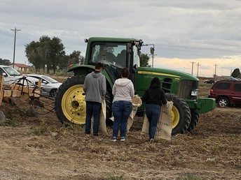 Tractoring the Tatoes