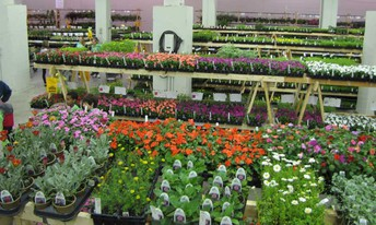 St. Joseph Annual Flower/Plant Sale