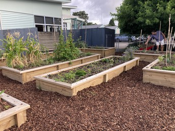 Bark has been put down and new veges planted