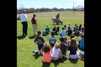 Students enjoyed watching the cow do tricks.