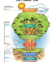 7 Habits Tree