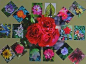 Makenzi Isaac's Floral Photo Montage