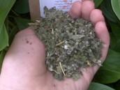 Remédios Herbais