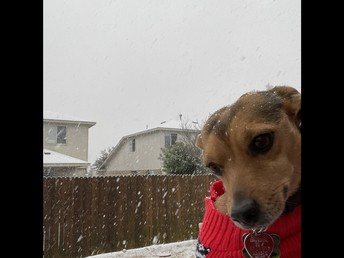Mrs. Jeffers' (Intervention) puppy, Copper enjoys the Snowy Weather, too!