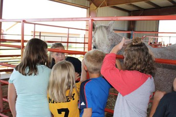 FFA Provides Hands-On Learning