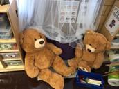 Meet Our Teddy's