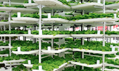 Urban / Vertical Farming