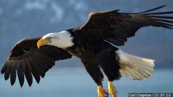 WE ARE BUENA VISTA EAGLES - WE SOAR TO SUCCESS