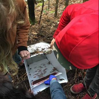 Students identify the paw prints of a gray fox.