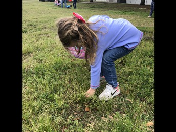 finding eggs in the grass!