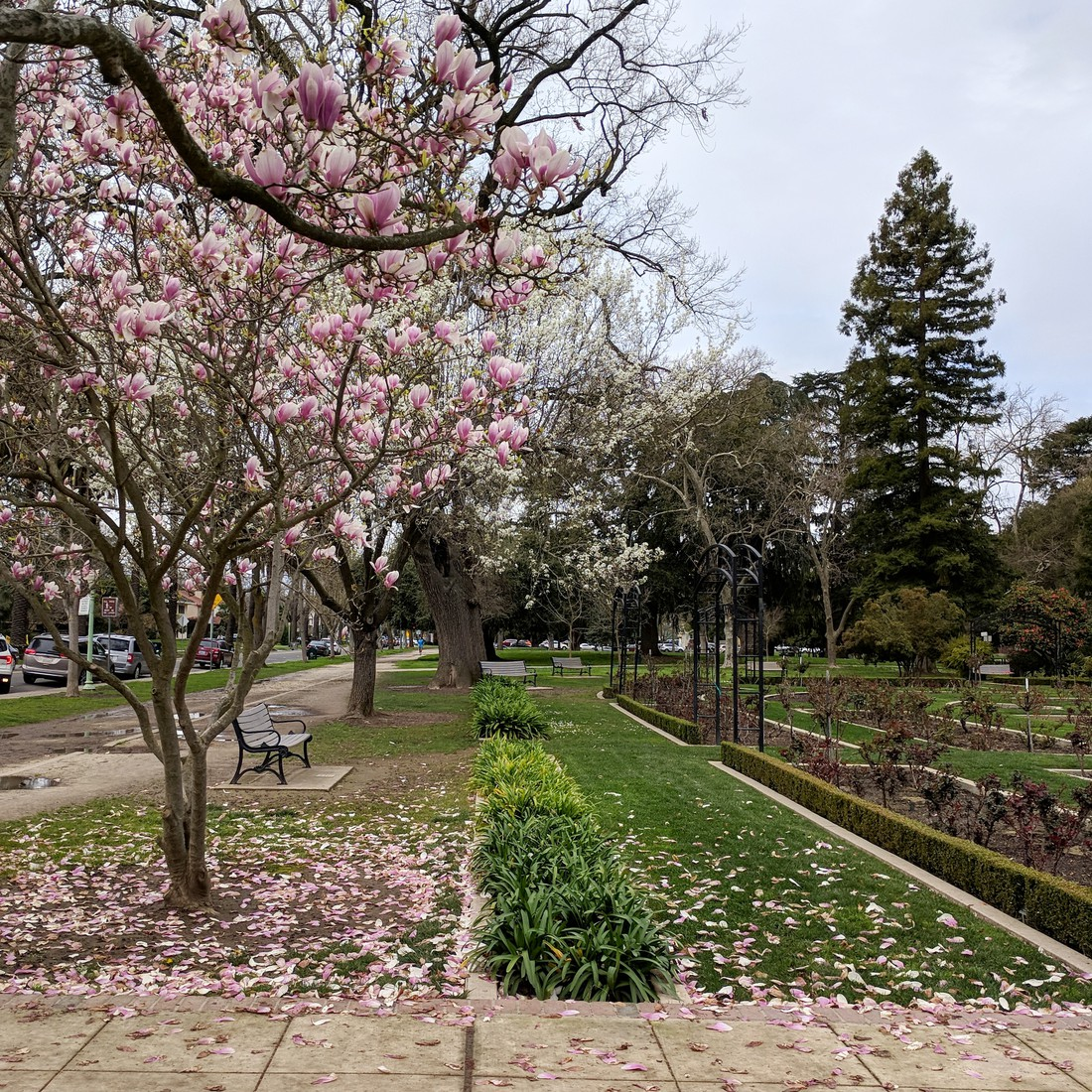 McKinley Park | late March 2019