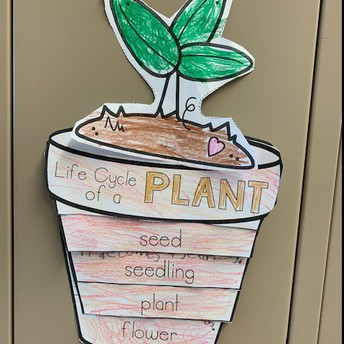 2B learning about plants