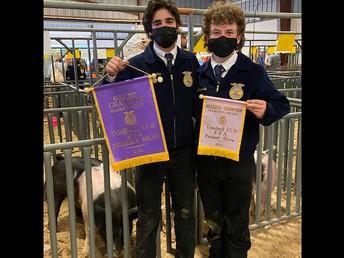 Swine Winners