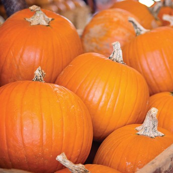 OLCC,P Pumpkin Extravaganza