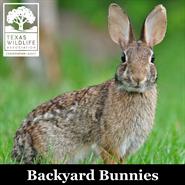 Animal Encounters: Backyard Bunnies