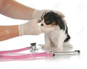 ALERT - Canine Influenza