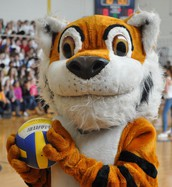 Who Wants to be the Tamanend Tiger?!