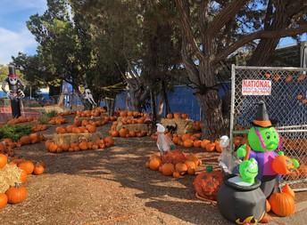Pumpkin Patch fundraiser