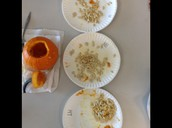 Estimating and Counting Pumpkin Seeds