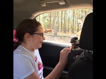 Fourth Grade Animal Defenses by Emily G.