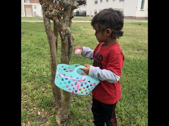 finding eggs in trees!