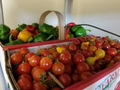 Produce for the Food Banks