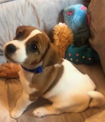 Meet Roxy!