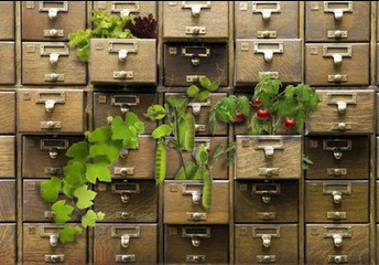 Seed Library March 18 1-3pm