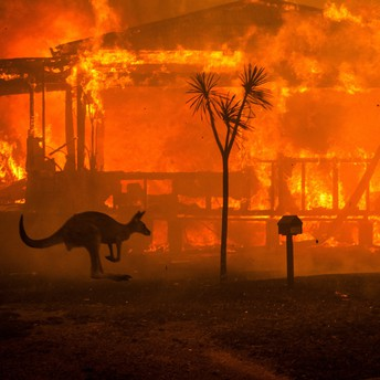 kangaroo hopping in front of a burning building