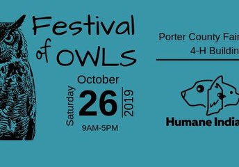 Festival of the Owls
