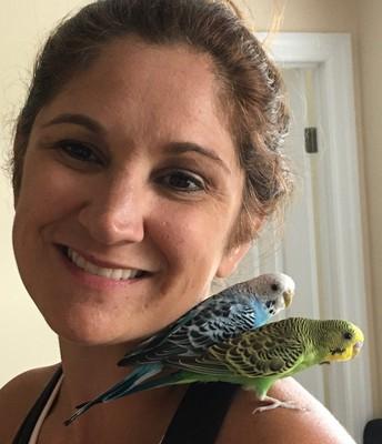 Meet the Parakeets!