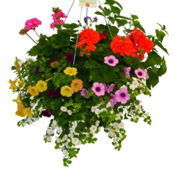 Last chance to order Gertens hanging baskets, perennials, planters, and more.   Accepting orders through April 8th at 10 pm.