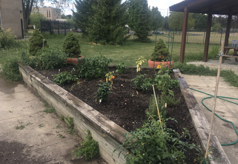 Vegetable garden at Conyers Learning Academy