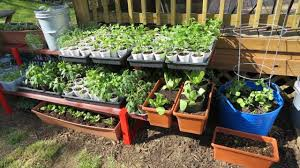 Support the Cause - Ms. Janousek is looking to expand her container garden!