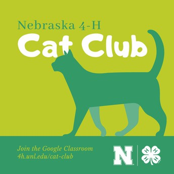 Check Out the New Cat Club