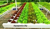 Real-World Strategies For Aquaponics Diy Clarified